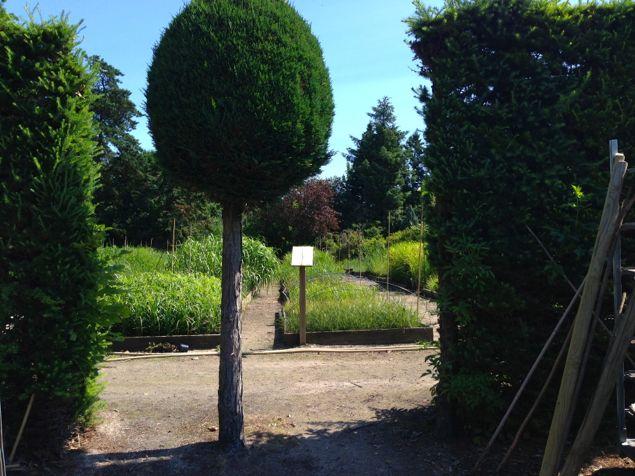 Lykkans-tradgardsdesign-designtradgardar-Overdam-plantskole